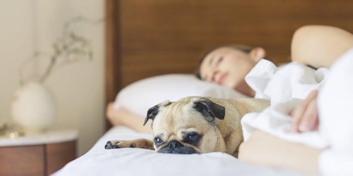 bed-pug-bedroom