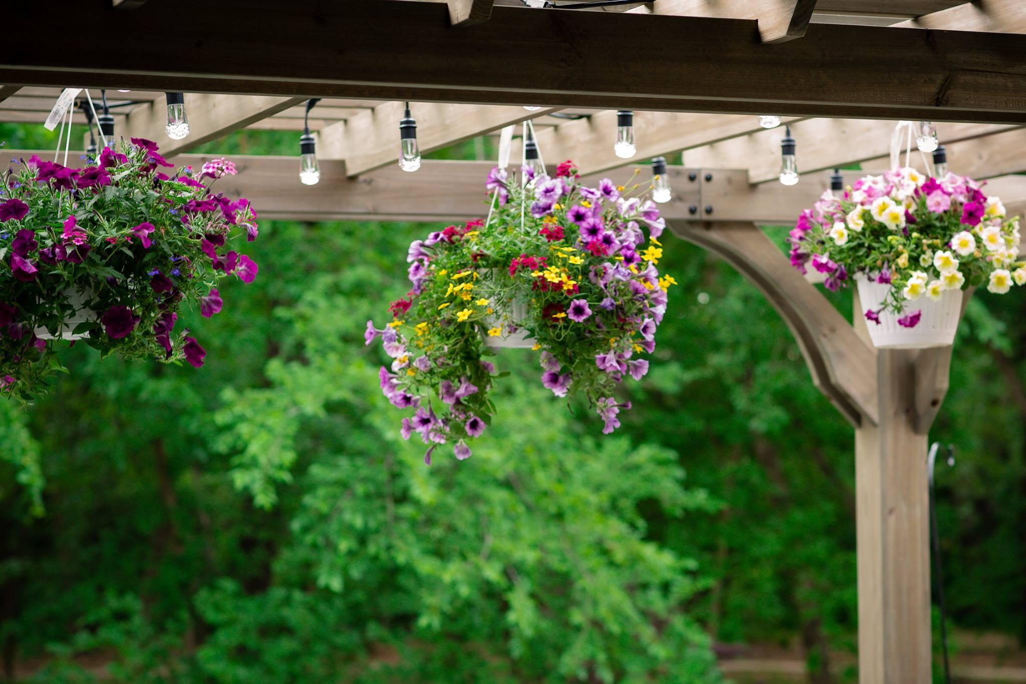 spring-cafe-lights-flowers
