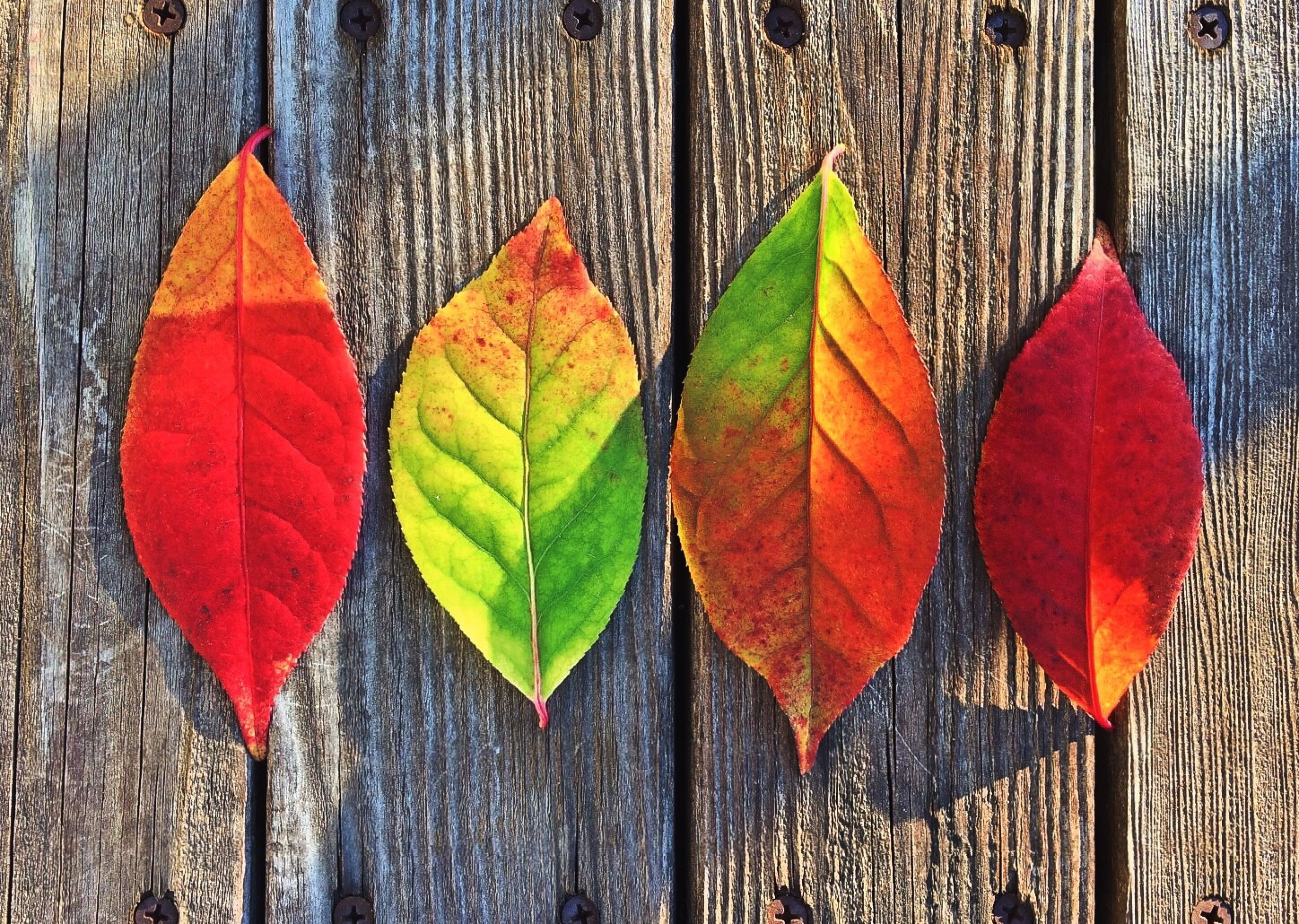 Follow these 4 tips to make your outdoor space a cozy spot you can still enjoy this fall.