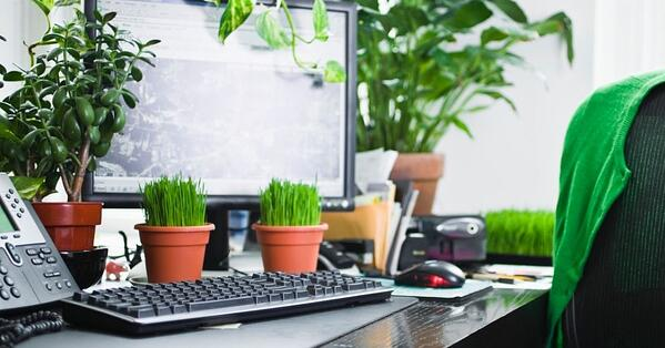 Use Plants at Your Desk for Health and Productivity Benefits