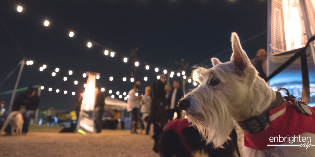 Light up OKC - Midtown Mutts.png