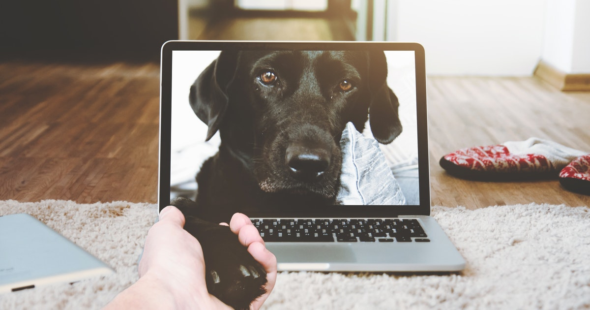 Integrating Technology and Animals
