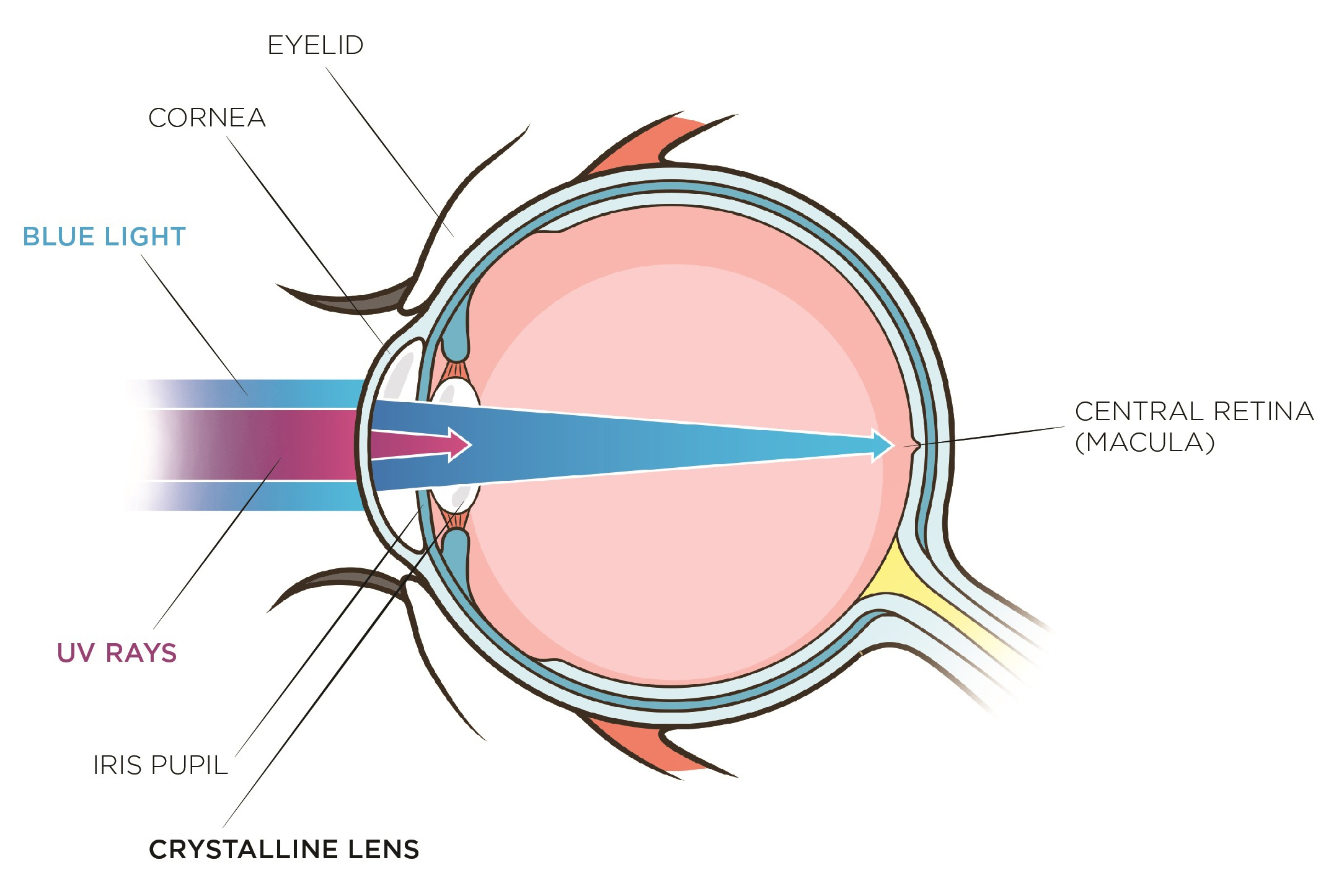 how blue light damages your eye